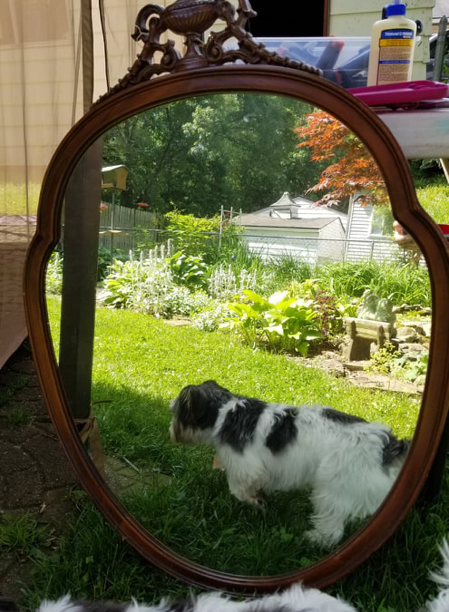 mirror with photo bomb doggie